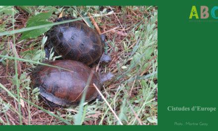 Biodiversité : À la découverte de la Cistude d'Europe
