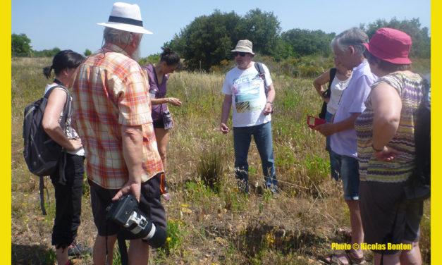 Atlas de la Biodiversité : Améliorer la connaissance floristique en Camargue
