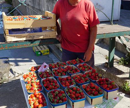 Des fraises de plein champ à Beauvoisin.