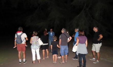 Cohabiter avec les chauves-souris en Camargue
