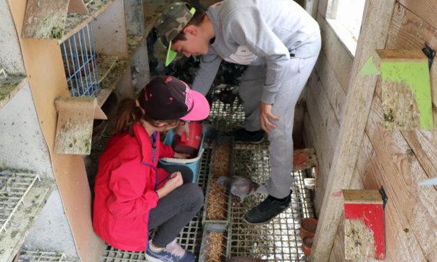 Les enfants se passionnent pour les pigeons voyageurs