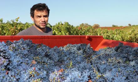 Edouard Sentex,  un artisan vigneron au plus près du terroir et de la nature