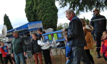 Le Cailar : Un lâcher de 300 pigeons conclut la cérémonie du 11 novembre