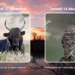 Deux « Belles Soirées » vous attendent au Scamandre