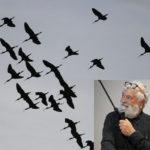 Le Centre Ornithologique du Gard s'est réuni au Scamandre