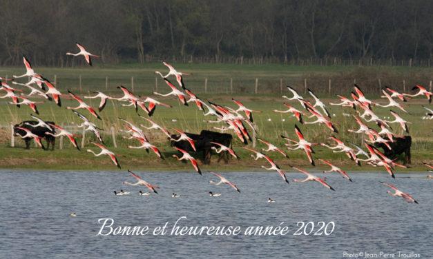 Toute l'équipe de VOIR PLUS Petite Camargue vous souhaite une bonne année 2020