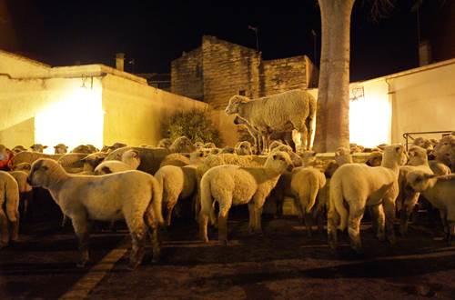 Noël d'Antan à Aimargues @ Place de la Mairie