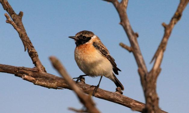 Un visiteur à plumes intrigue les ornithologues