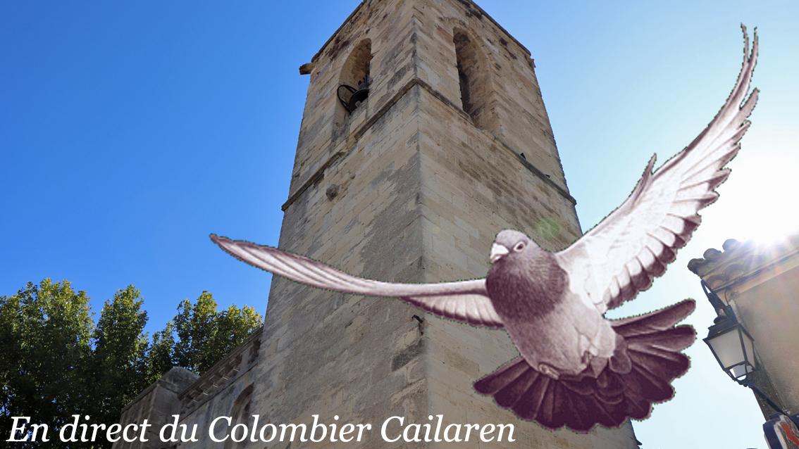 Quiz sur « Les Relations du Colombophile avec ses pigeons »