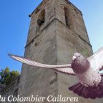 Quiz sur « le Baguage » du pigeon voyageur