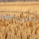 De pas counfoundre : lou rousèu e la cano