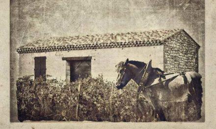 Une photo, une histoire : le mazet de vigne.