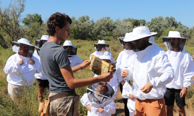 Récolte et dégustation du miel à l'île aux abeilles