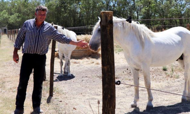 Éleveur de chevaux et taureaux reconnu, cavalier émérite, Renaud Vinuesa porte haut la Bouvine et les traditions