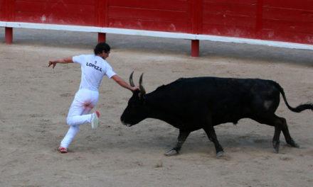Festiv'Arènes à Vauvert : Le Club Taurin l'Abrivado ouvre le « bal » avec une course niveau Trophée de l'Avenir