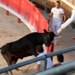 Festiv'Arènes à Vauvert : Une course de vaches cocardières de très belle tenue