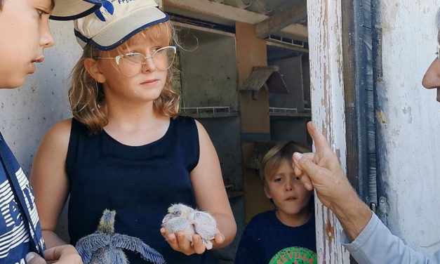 Les ados découvrent avec passion la colombophilie