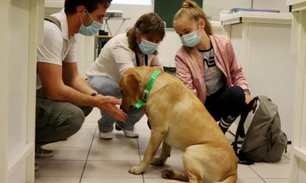 La médiation par le chien en phase d'expérimentation au collège de Vauvert