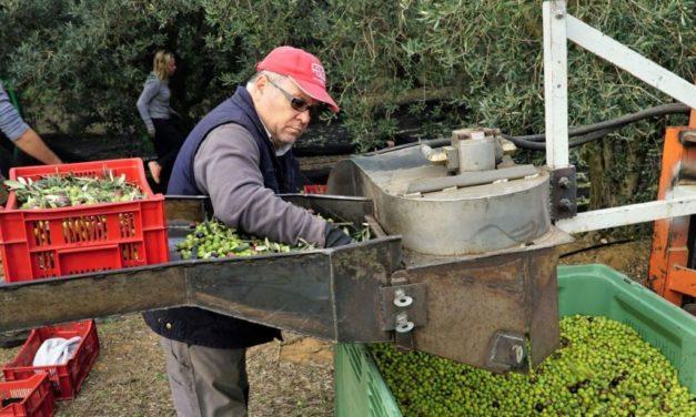 De la vigne à l'olive