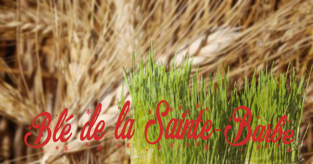 Après le calendrier de l'avent, les blés de Noël