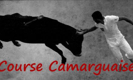 Course Camarguaise : le nouveau comité directeur élu