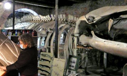 Voyage au cœur de la baleine, une rencontre insolite