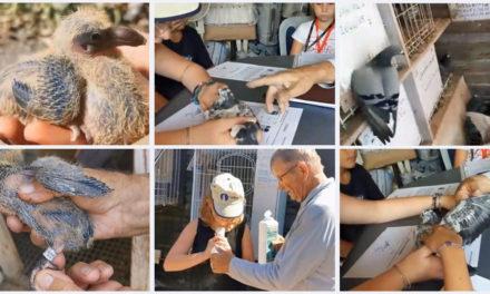 Un cahier pédagogique pour les jeunes colombophiles cailarens