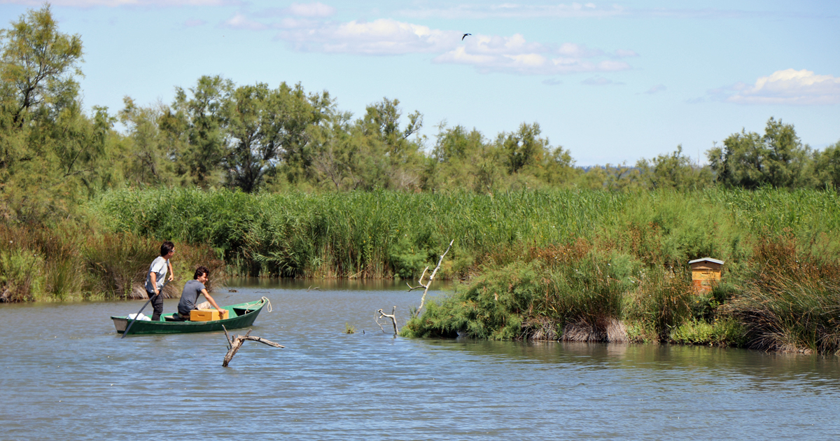 Camargue Gardoise : Sorties nature du printemps