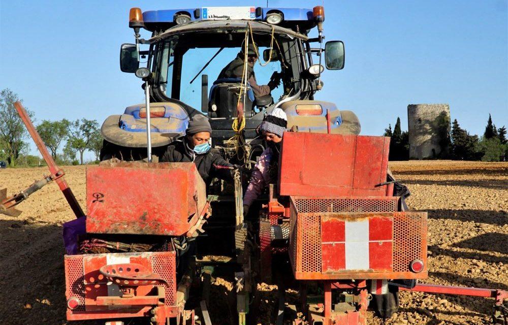 Plantation de vignes et technologie de Pointe