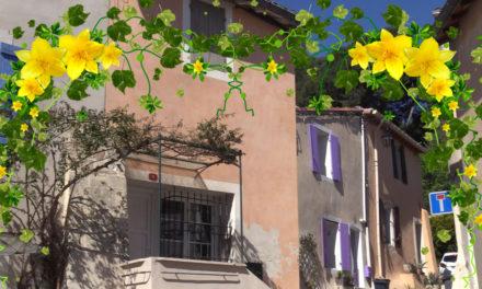concours « Vauvert en fleurs »