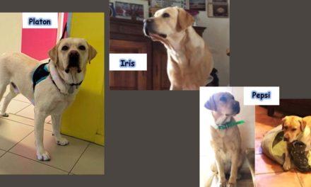 Les chiens sont à l'honneur au collège la Vallée Verte à Vauvert