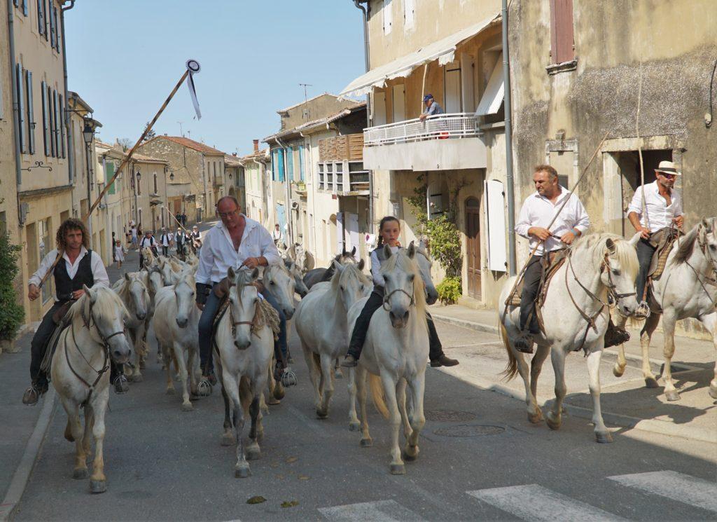 Thomas Fougairolles et sa manade de chevaux