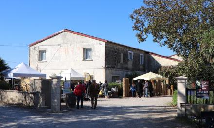Le domaine du Vistre fête le vin primeur avec la seizième édition du marché de producteurs